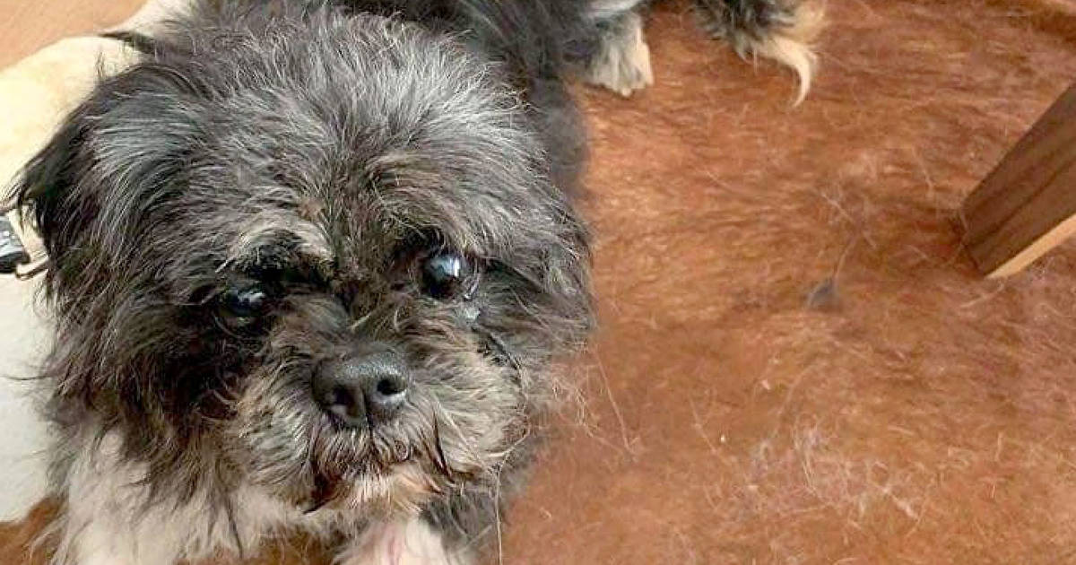Over 40 dogs rescued and brought to Toronto after horrific hoarding situation