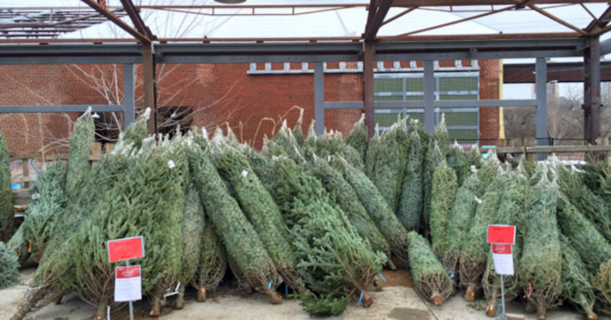 Where To Buy A Christmas Tree In Toronto