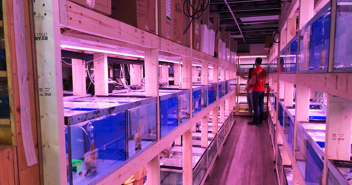 Toronto's most famous pet store and aquarium just reopened