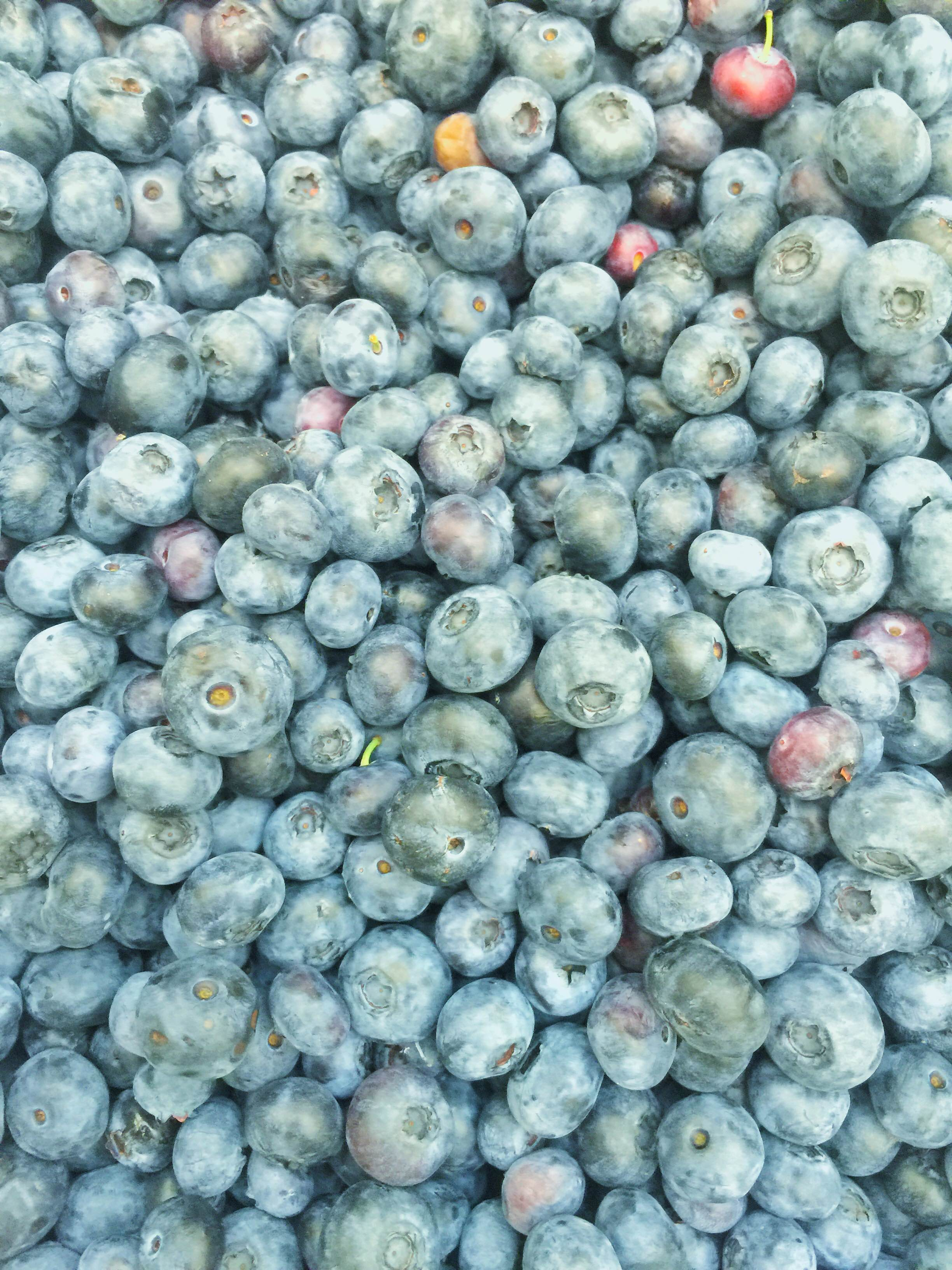 Summer Blueberries