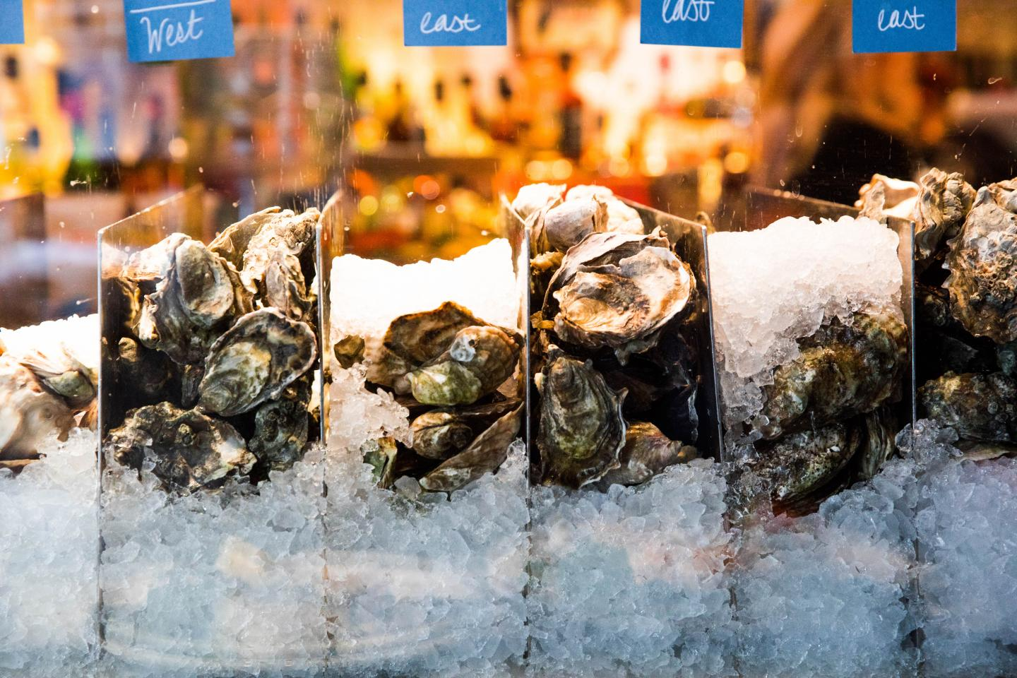 oysters at the oyster bar