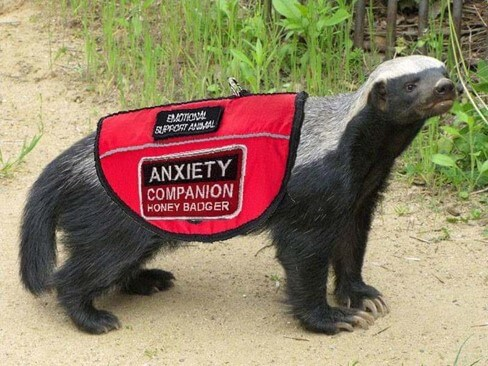 Is Relief for Fraudulent Emotional Support Animal Accommodation Requests on the Horizon?