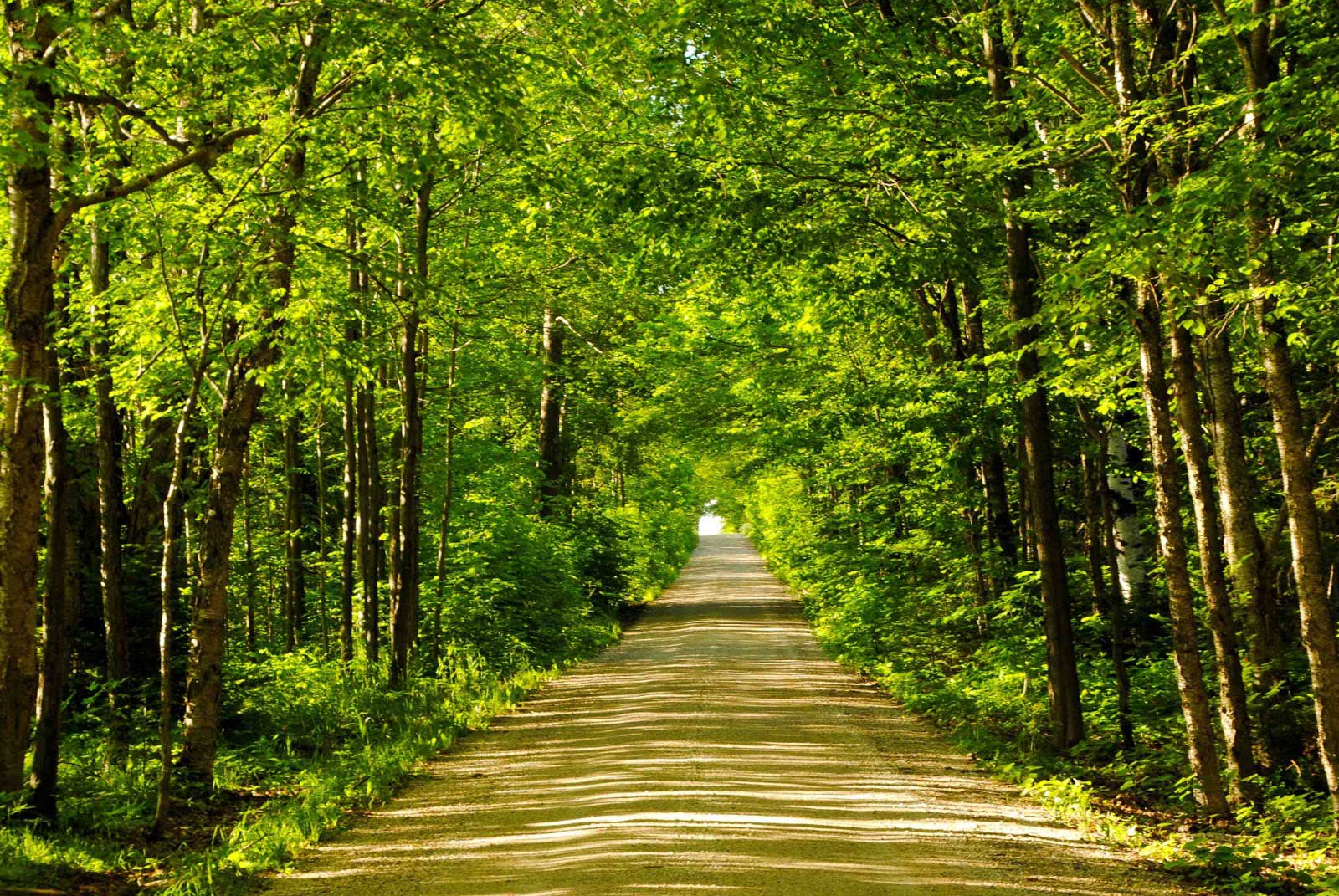 Wooded path in Zachary, LA