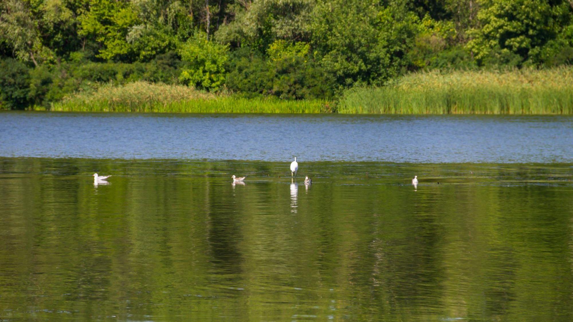 Lake at The Cove.