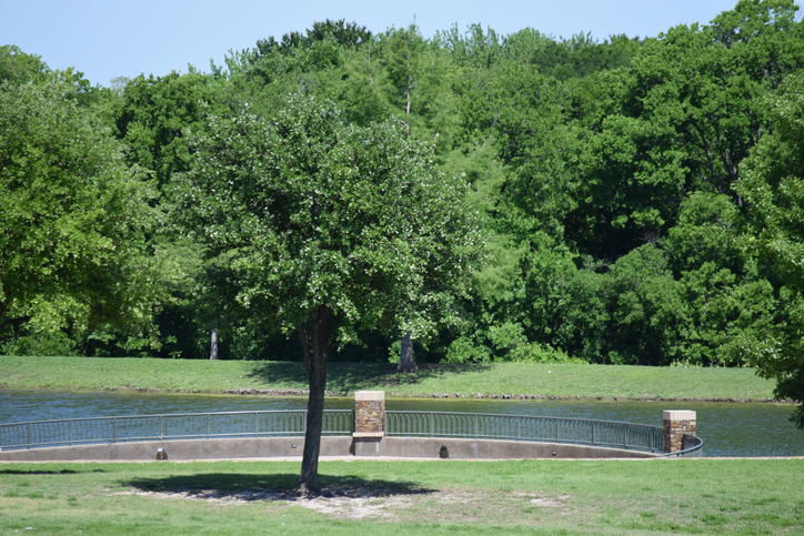 Trees and lake at Frisco Commons Park in Frisco, Texas