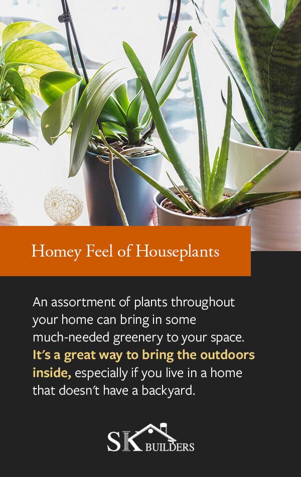 Homey Feel of Houseplants
