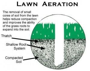 lawn-aeration