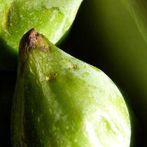 Figs square