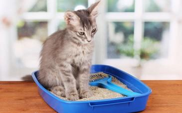 Cats and toxoplasmosis