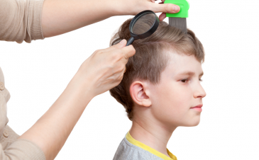 Head lice: the parental nightmare
