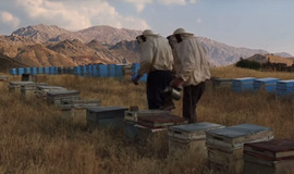 20150901194020-no-117-the-beekeeper-banner.jpg