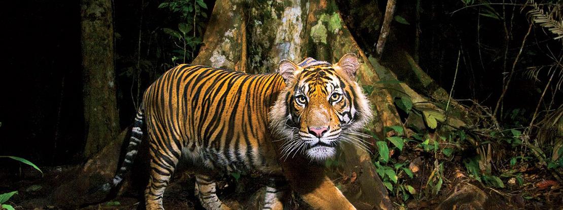20150921163349-no-120-tiger-tiger-banner.jpg