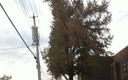 20141204104917-tree.jpg
