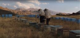 20150901194023-no-117-beekeeper.png