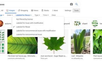 20200520202828-google-image-search-1.jpg
