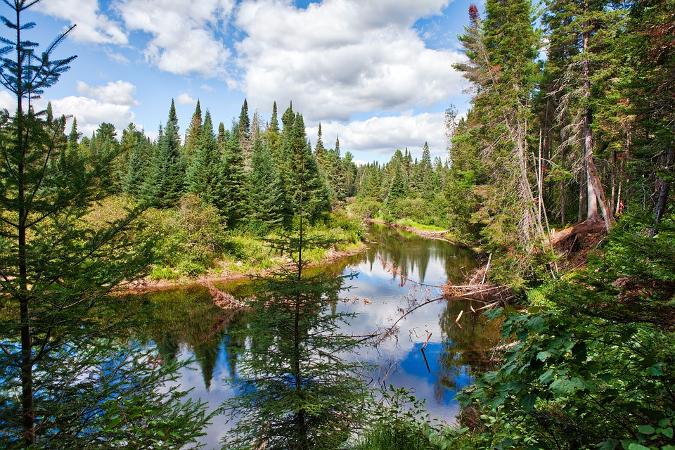 Get to Algonquin Park with a charter bus rental.
