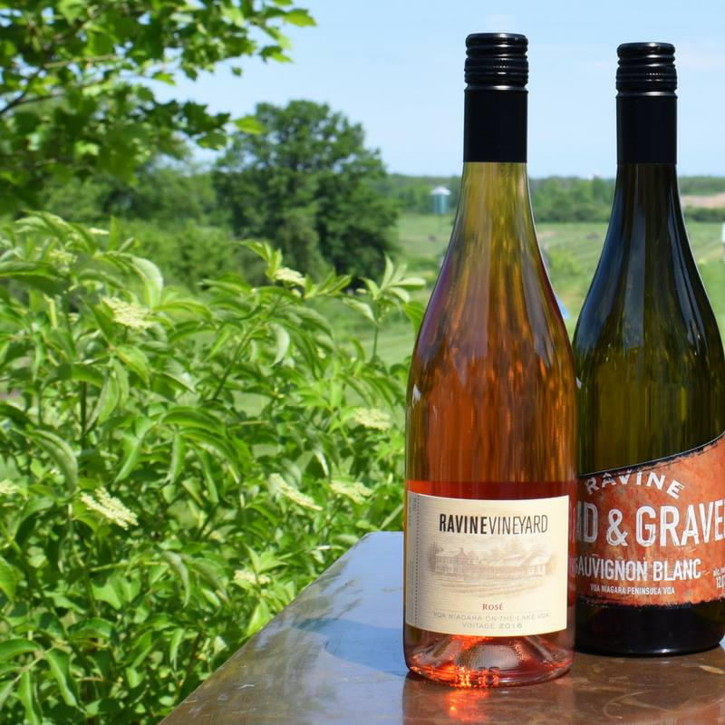 Visit Ravine Vineyard in Niagara by renting a charter bus.