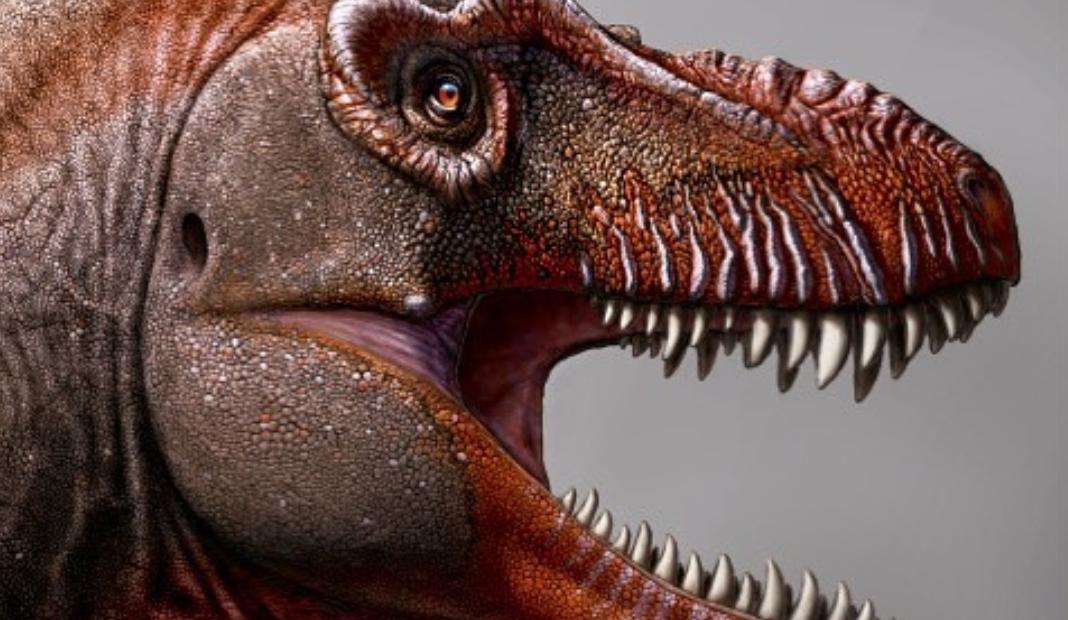 nueva especie de tiranosaurio