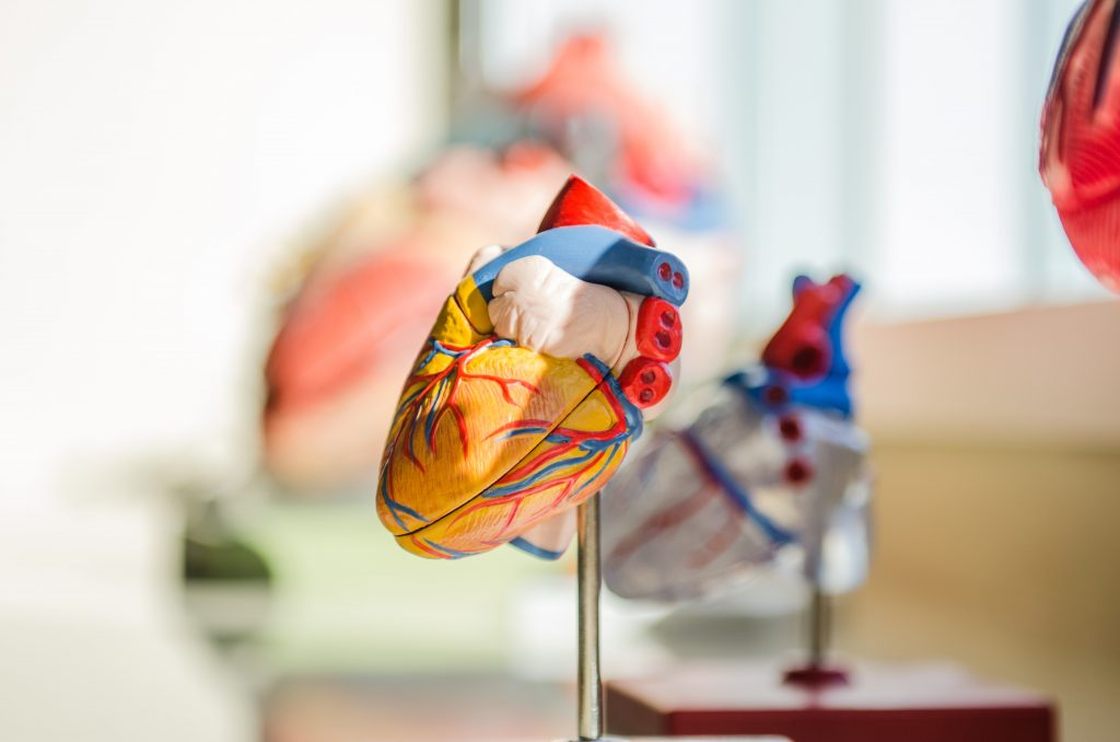 latidos de corazón de un humano