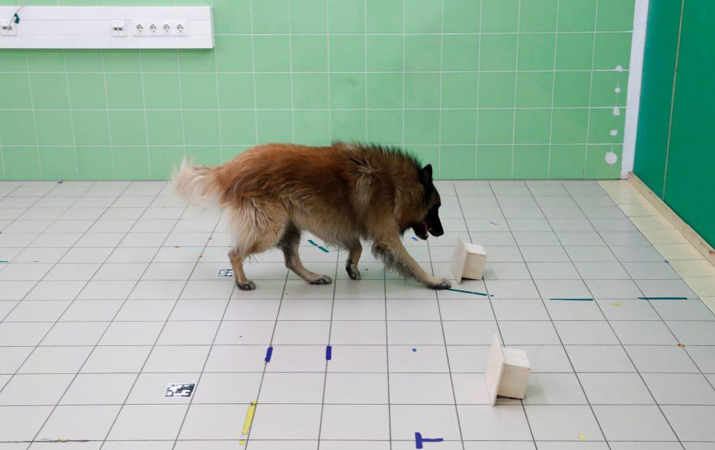 nariz perros sensor infrarrojo temperatura pastor belga