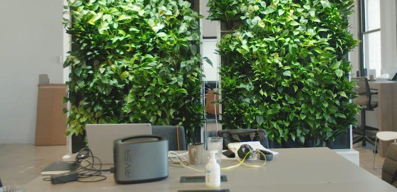 Paredes verdes |Oficinas