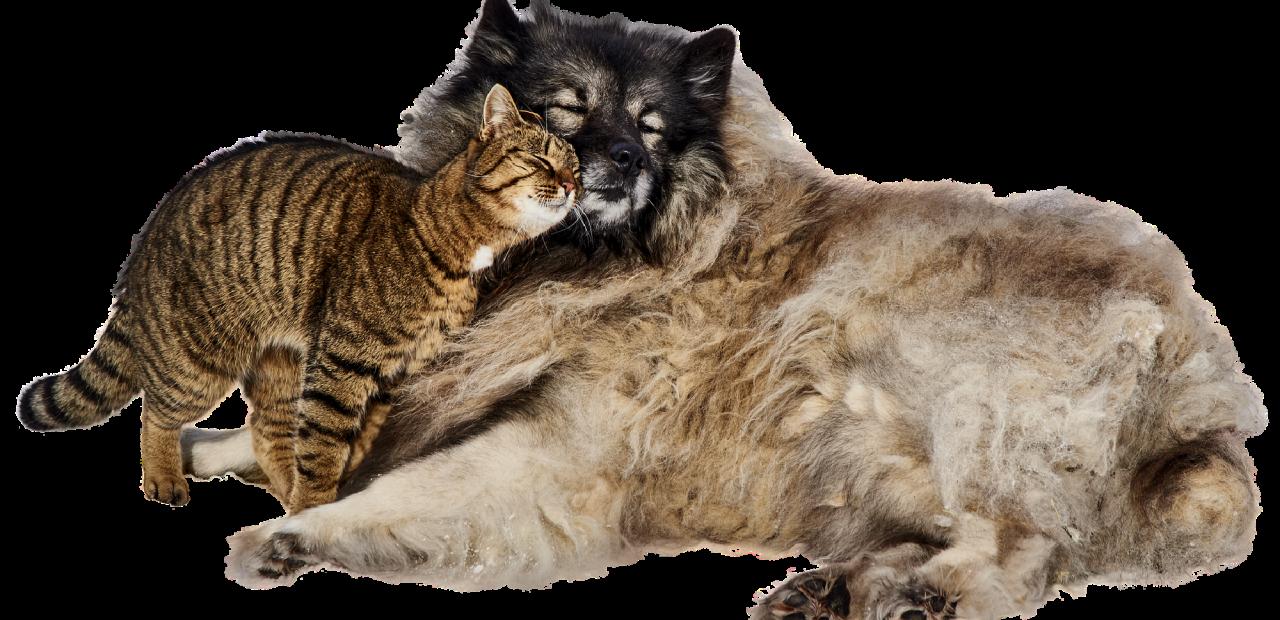 perros y gatos china