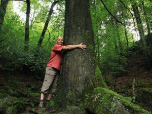Servicio Forestal de Islandia alienta a los residentes a abrazar árboles en lugar de personas