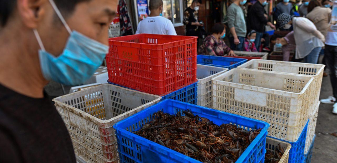 mercados húmedos wuhan china animales exóticos vivos problemas de clientes
