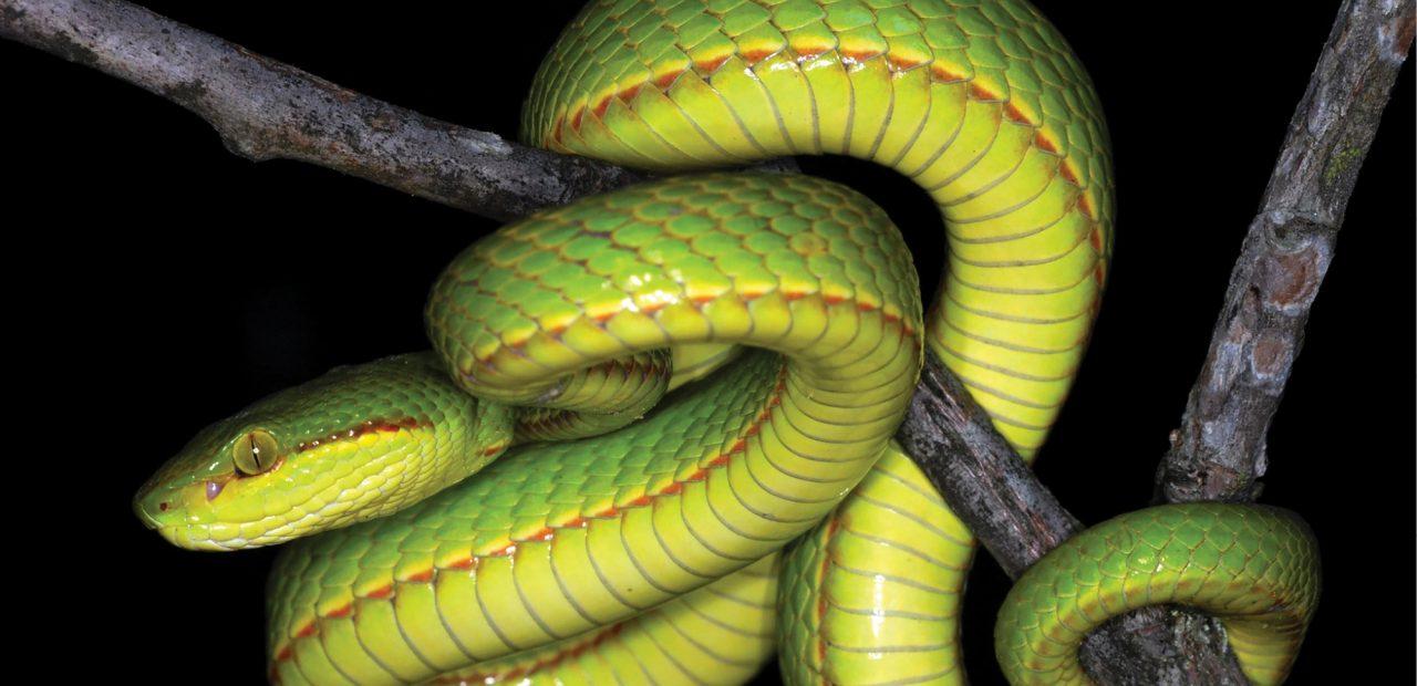 serpiente Harry Potter salazar slytherin