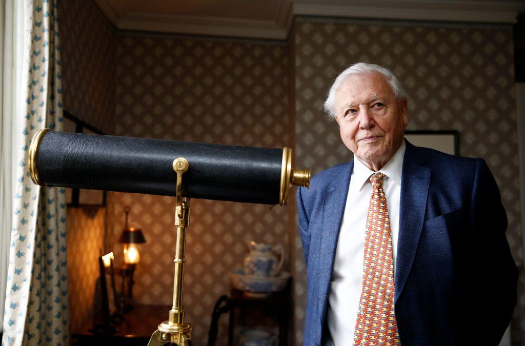 David Attenborough inglaterra curso gratuito de oceanos y animales desde casa