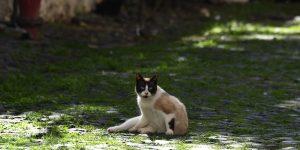 La Agencia de Medicamentos y Alimentación de EU está recomendando que las mascotas y sus dueños también mantengan sana distancia