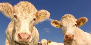 Consumo de carne mexicana aumenta en EU por el coronavirus – exportaciones del sector crecerán este año