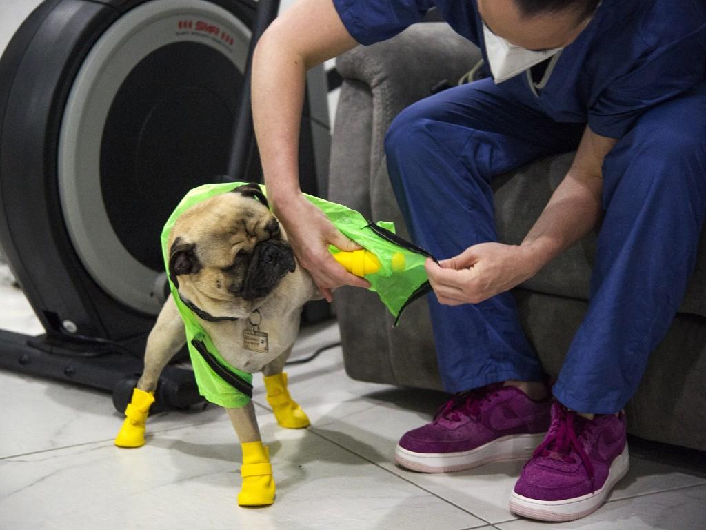 Harley perro terapeuta