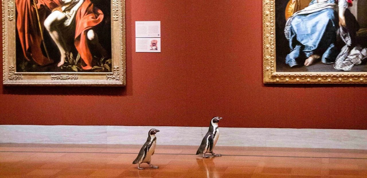 pingüinos | Museo | Museo de arte de Nelson-Atkins | Business Insider México