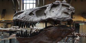 El impacto del asteroide que extinguió a los dinosaurios fue más letal de lo que se pensaba