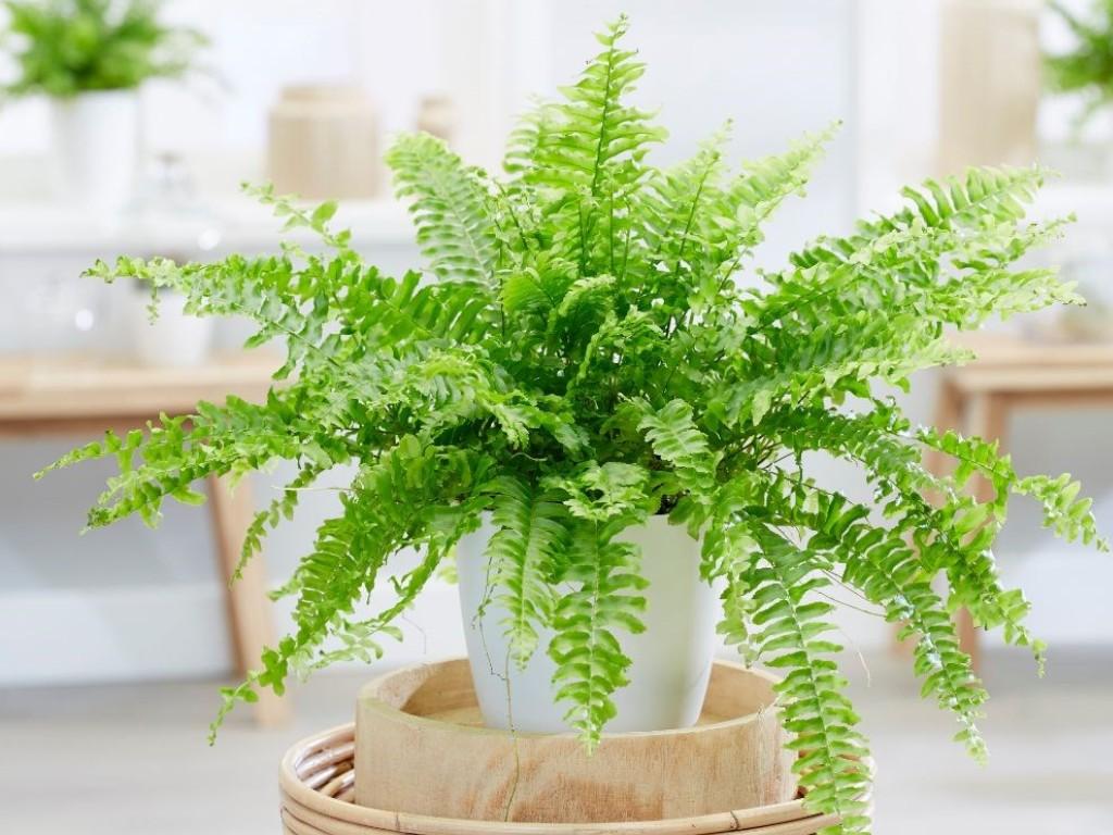 hogar plantas