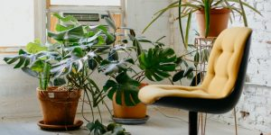 Mantén fresco tu hogar con estas plantas, y olvídate del aire acondicionado