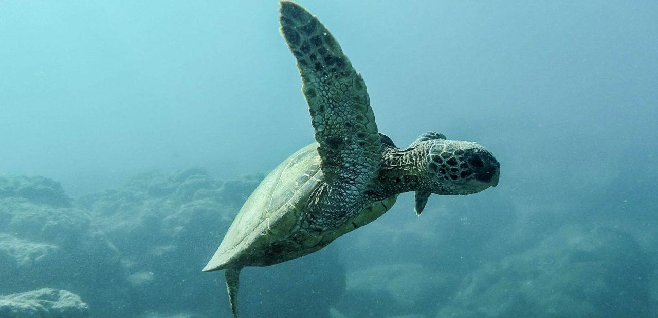 océanos   business insider México