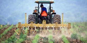 Agricultores de Michoacán se  dan de alta en el IMSS y el SAT – y cultivan alimentos cuidando el medio ambiente