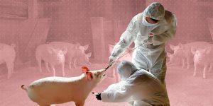 """Una nueva cepa de gripe porcina circula entre los cerdos chinos — y tiene """"potencial pandémico"""""""