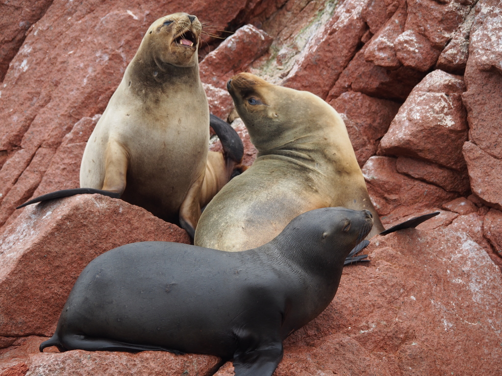 sea-rock-play-animal-wildlife-zoo-109606-pxhere.com_