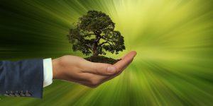 Solo 30% de las empresas de México invierte en temas de sostenibilidad y medio ambiente