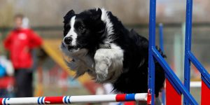 Estas son las razas de perro más inteligentes, según un psicólogo