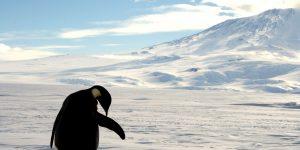 Gas metano se está filtrando misteriosamente del fondo del mar en la Antártida, llevando al calentamiento global a un punto sin retorno