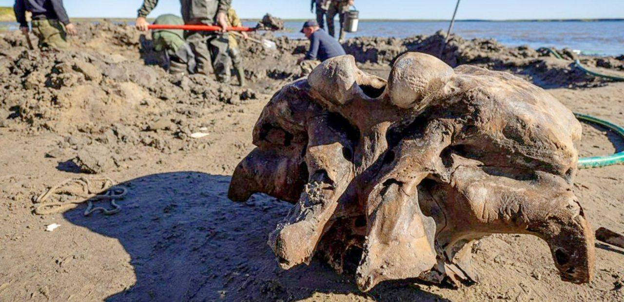 mamut lago siberia| Business Insider México