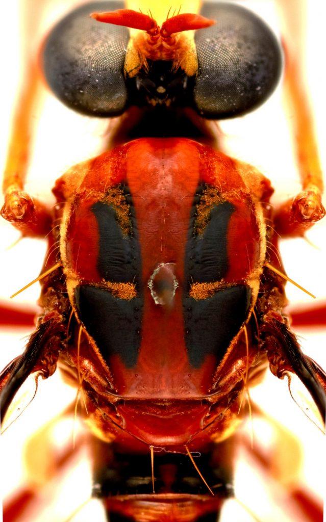 Marvel mosca