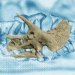 Un grupo de científicos descubrió cáncer en el fósil de un dinosaurio