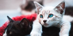 Los veterinarios comparten 11 cosas que todo dueño de un gato debe hacer