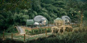 Este hotel en Tailandia permite que sus huéspedes pasen la noche junto a los elefantes, gracias a sus suites en forma de burbujas