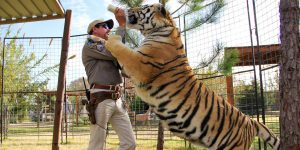 El zoológico de la docuserie «Rey Tigre» de Netflix cierra permanentemente —el dueño culpa a los «locos» animalistas